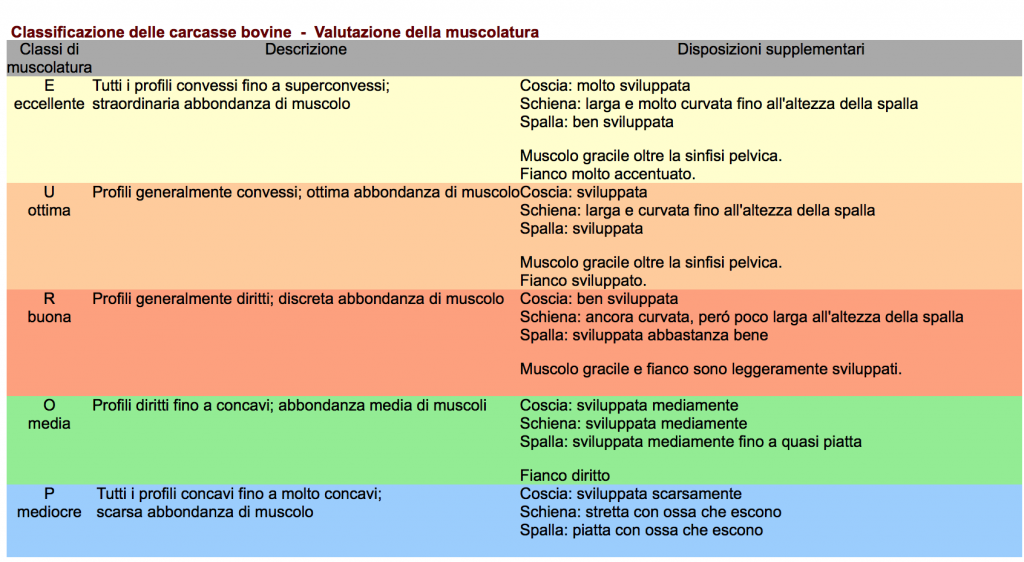 Vitellone classificazione muscolatura